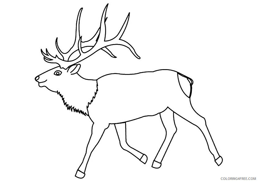Moose Coloring Sheets Animal Coloring Pages Printable 2021 2932 Coloring4free