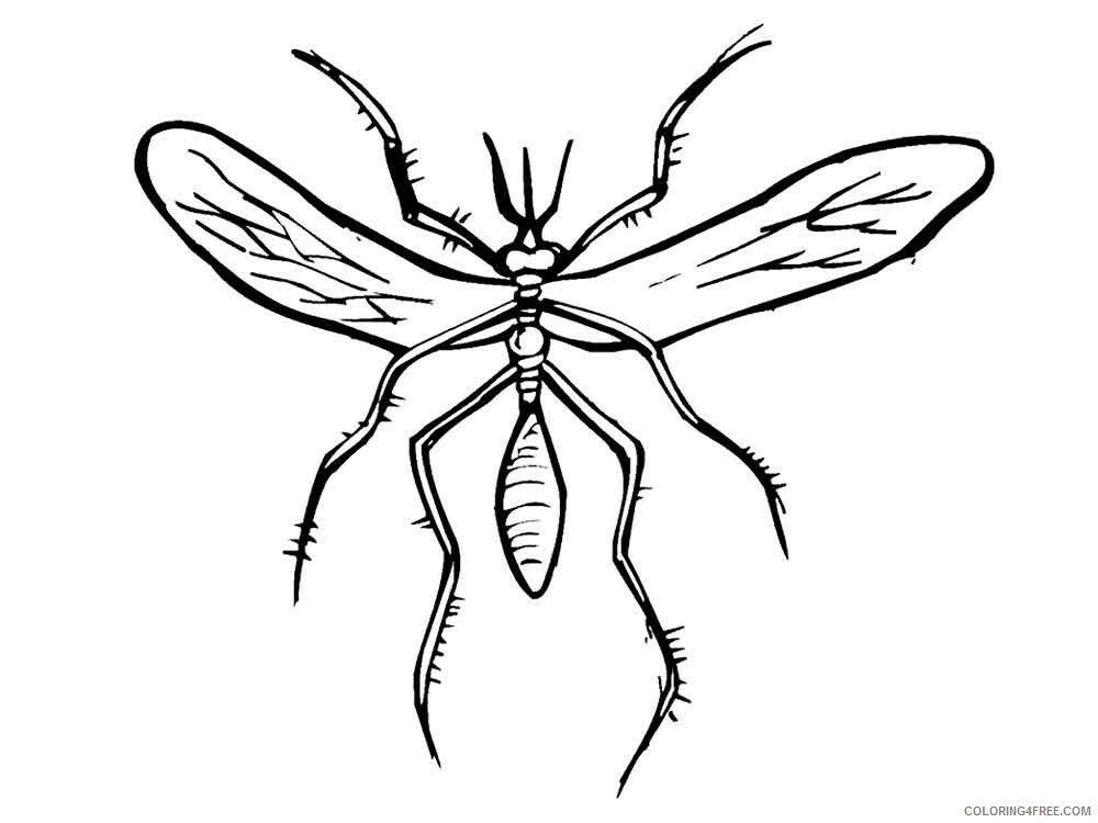 Mosquito Coloring Pages Animal Printable Sheets Mosquito 12 2021 3384 Coloring4free