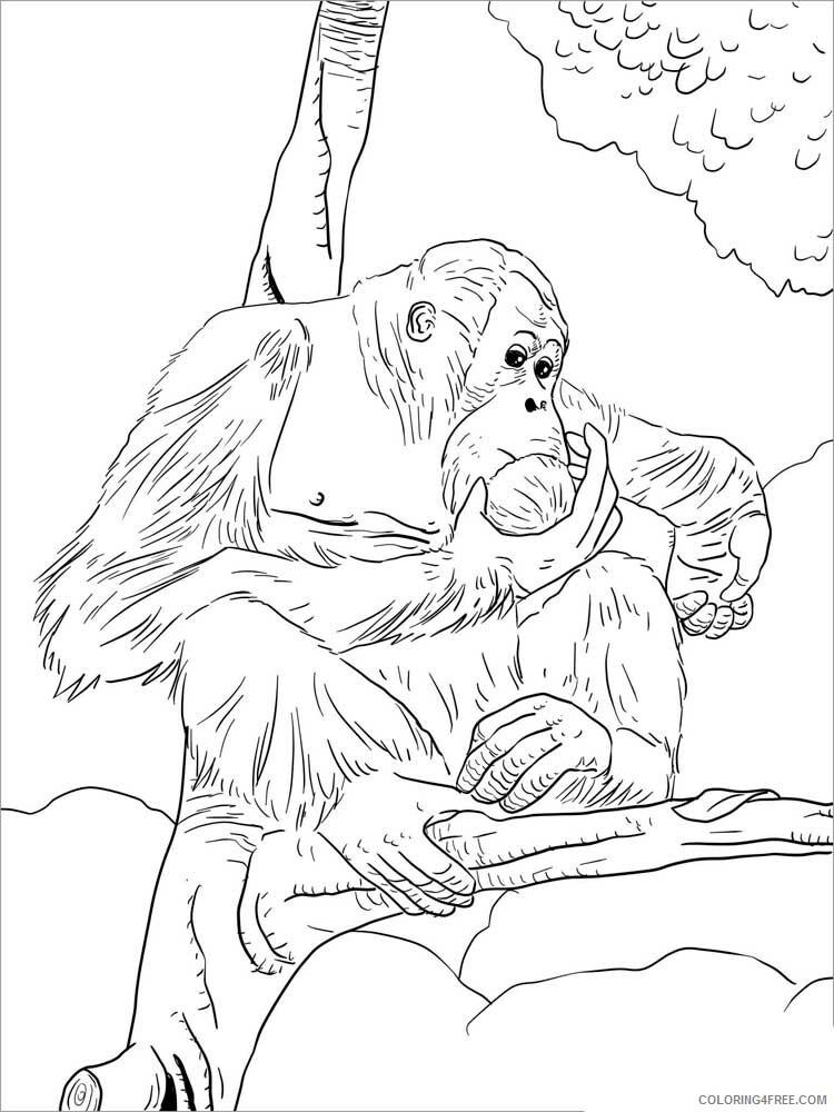 Orangutan Coloring Pages Animal Printable Sheets Orangutan 6 2021 3543 Coloring4free