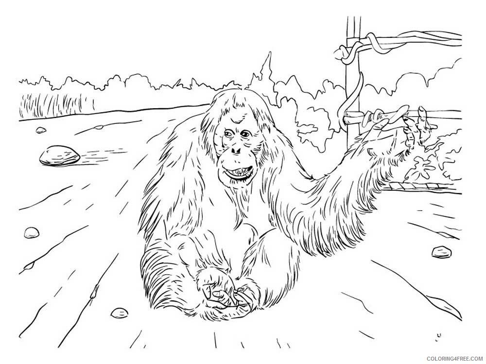 Orangutan Coloring Pages Animal Printable Sheets Orangutan 8 2021 3545 Coloring4free