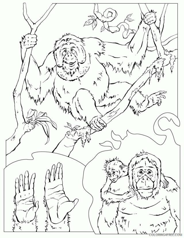 Orangutan Coloring Sheets Animal Coloring Pages Printable 2021 2984 Coloring4free