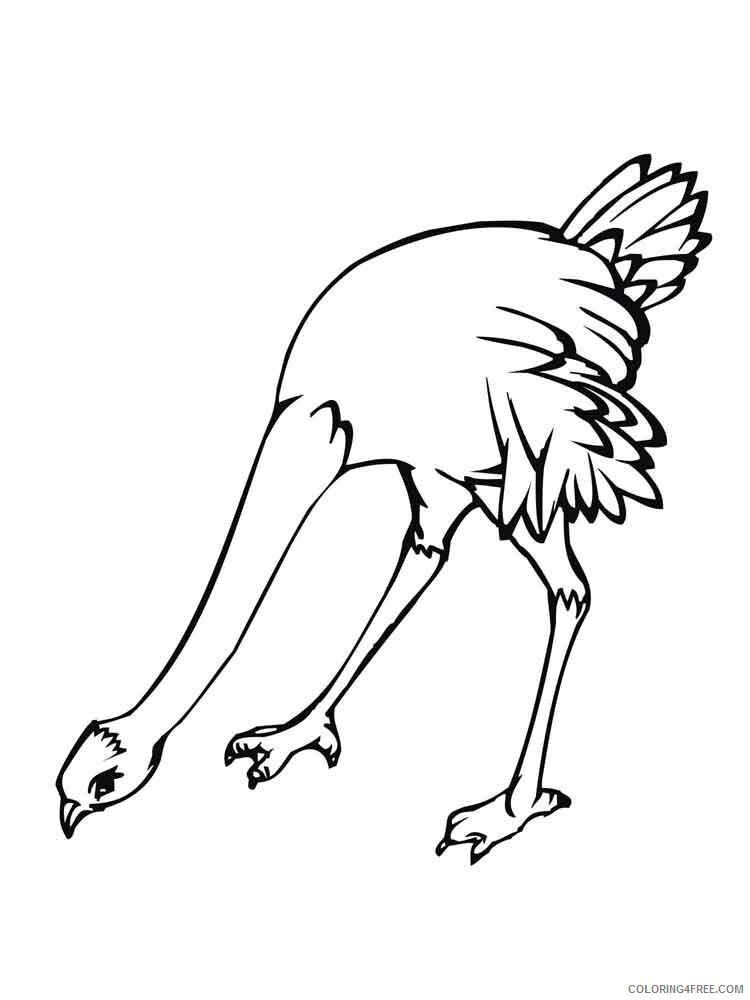 Ostrich Coloring Pages Animal Printable Sheets Ostrich birds 9 2021 3566 Coloring4free