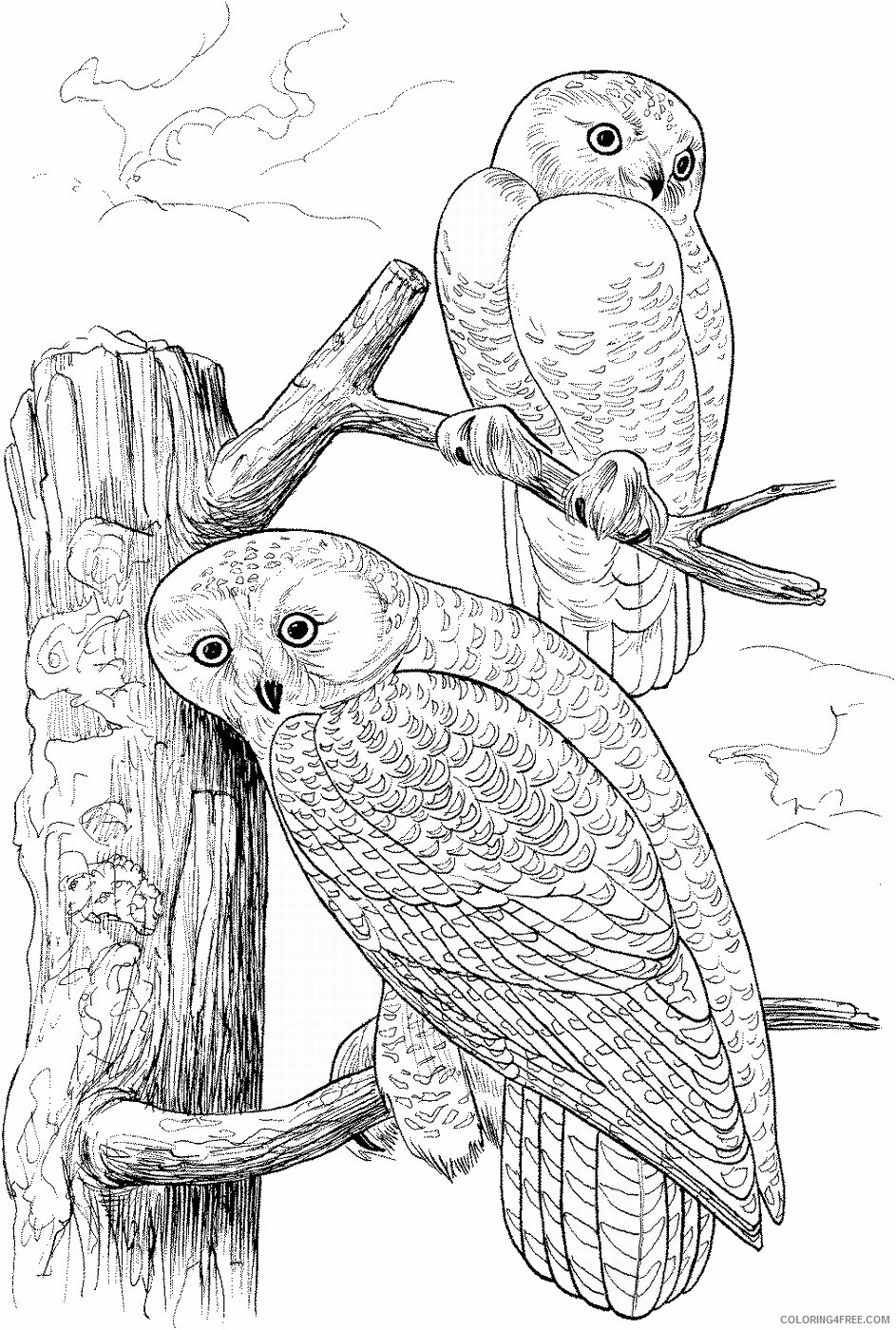Owl Coloring Pages Animal Printable Sheets Owl_cl_11 2021 3638 Coloring4free
