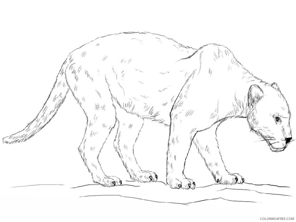 Panther Coloring Pages Animal Printable Sheets panther 2 2021 3705 Coloring4free