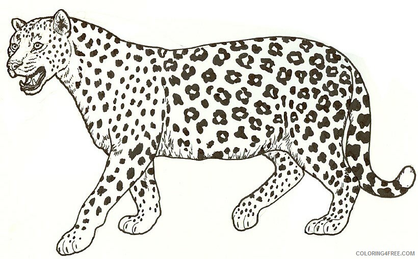 Panther Coloring Pages Animal Printable Sheets panther PNEED 2021 3703 Coloring4free