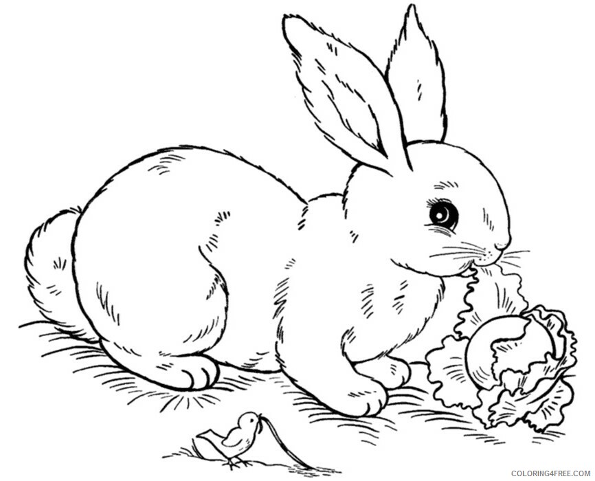 Rabbit Coloring Sheets Animal Coloring Pages Printable 2021 3595 Coloring4free