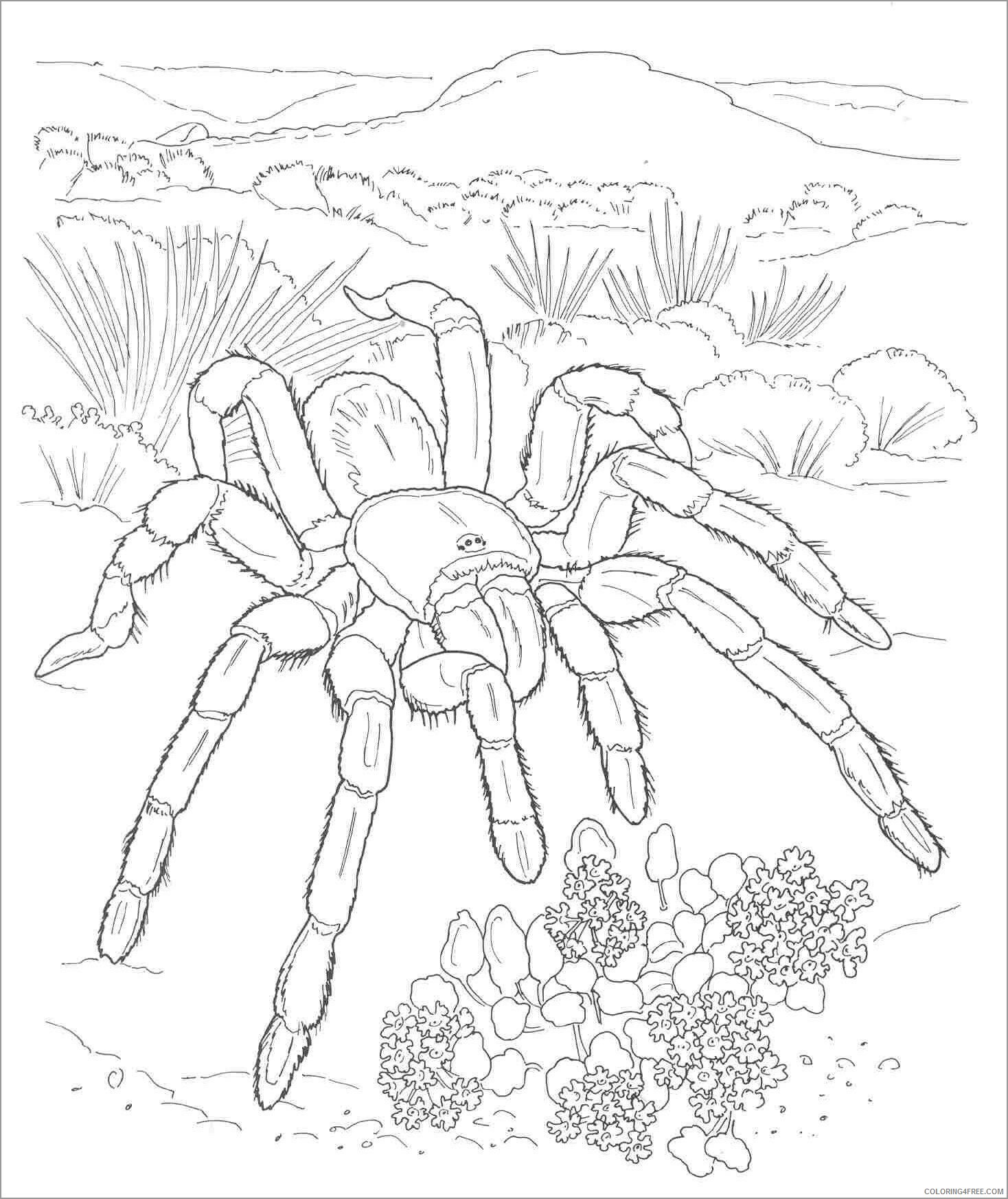 Spider Coloring Pages Animal Printable Sheets spider desert animal 2021 4655 Coloring4free