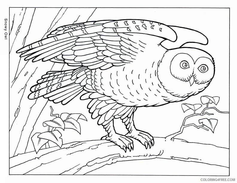 Az Coloring Pages of Animals Printable Sheets Pleasant Realistic Animal Pages 2021 a 4457 Coloring4free